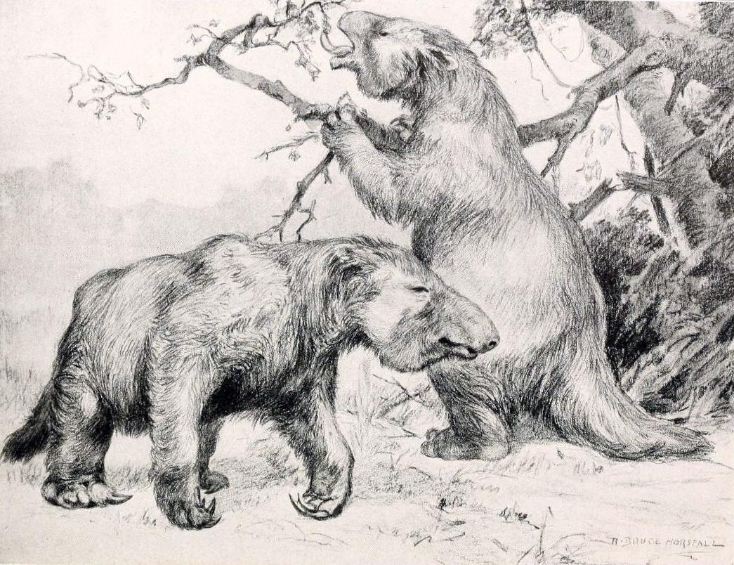 Megatherium_americanum