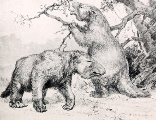 Giant Sloths - Wikimedia