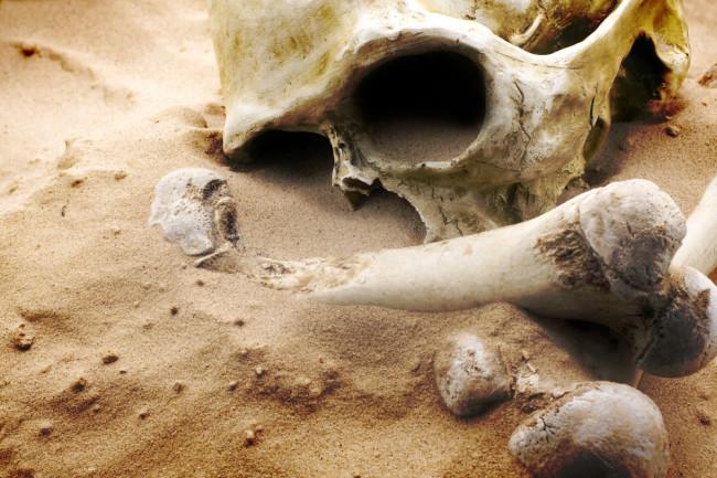 human skull apocalypse homo sapien extinction - shutterstock