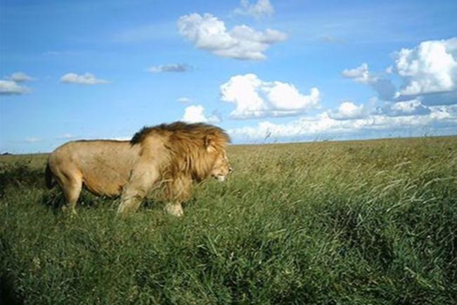 snapshot safari lion