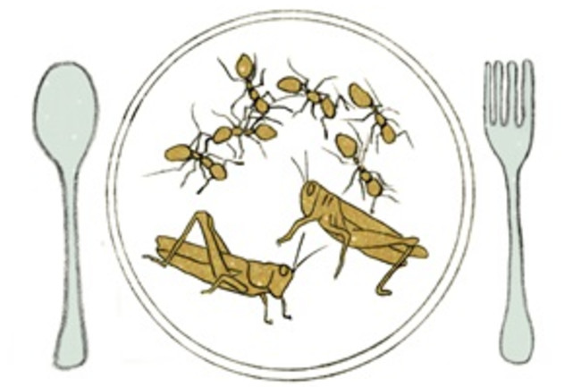 DSC-P0817 ASPOT-insects