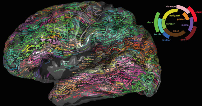 Semantic Brain Map - University of California
