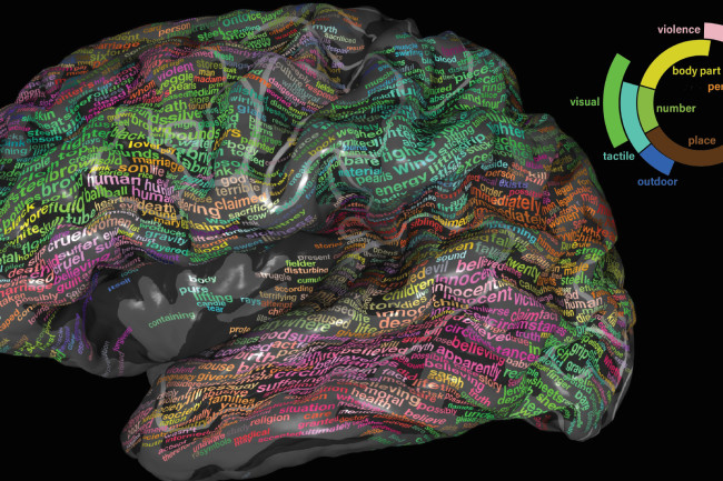 Semantic Brain Map - University of California