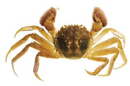 3-crab.jpg