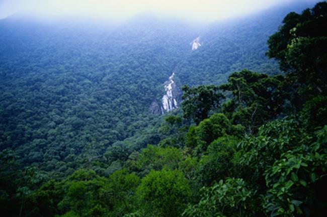waterfall-in-amazon-forest-080801.jpg