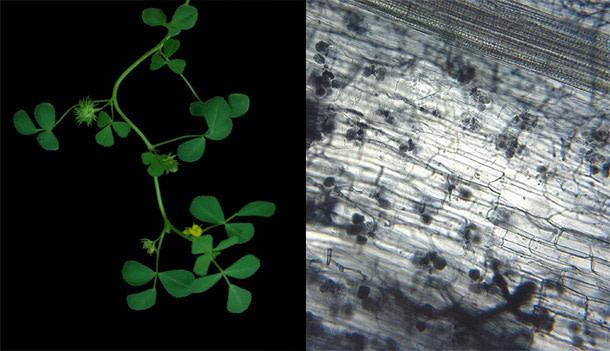 Plant_fungi.jpg