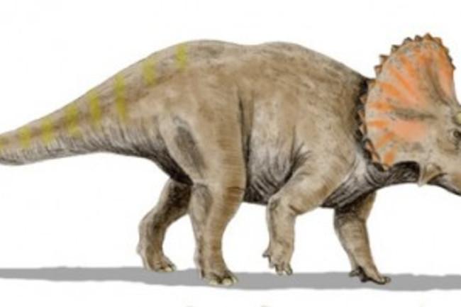 Triceratops-425x199.jpg