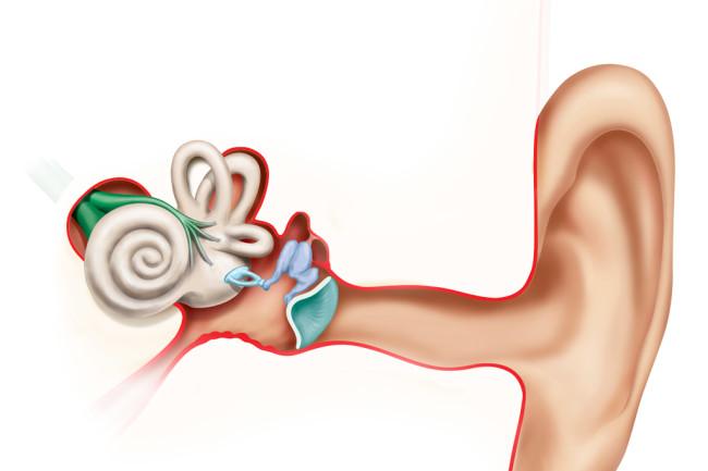 cochlea.jpg