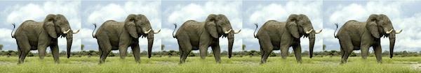 five-elephants600.jpg