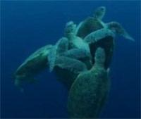 Turtle-mating.jpg