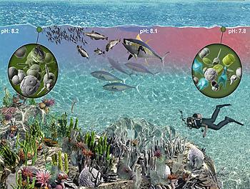 co2-diver-plankton-350.jpg