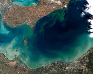 algae-bloom
