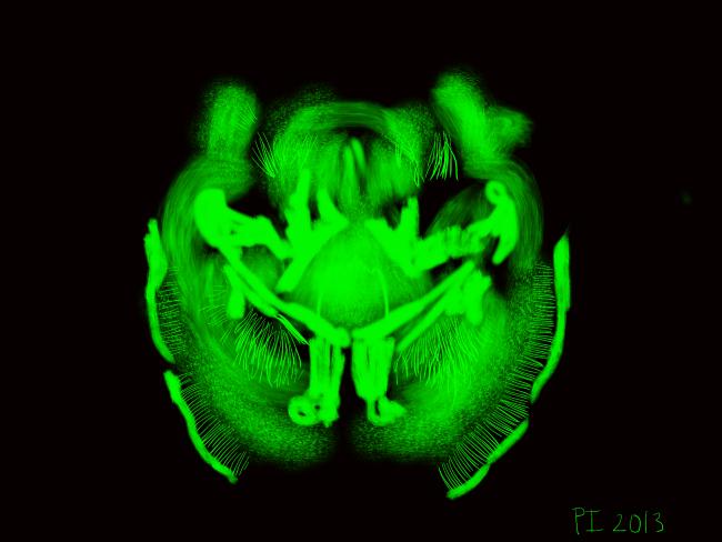 Fluorescent-Brain.png