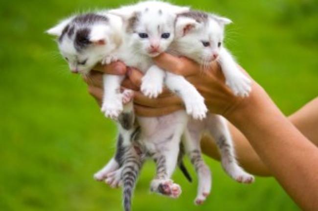 squeeze-cat-300x241.jpg
