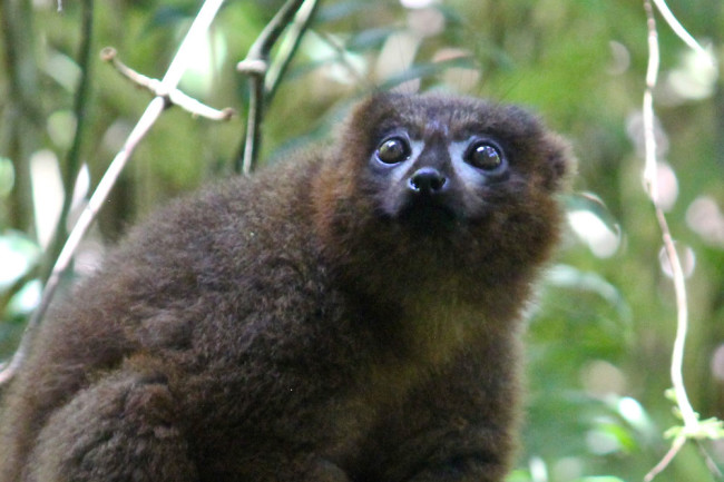 Lemur2_Credit-Stacey-Tecot.jpg