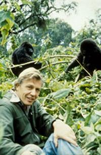 Attenborough-gorillas.jpg