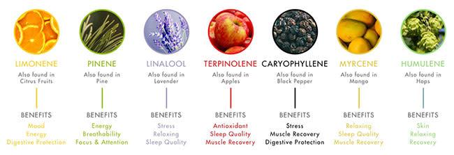 Terpene chart