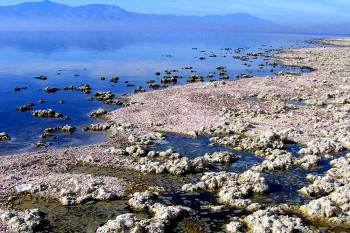 Trying to Forecast Earthquakes Near the Salton Sea