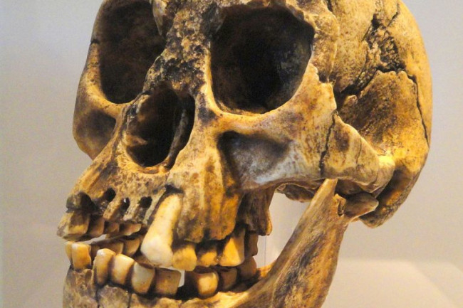 Homo floresiensis Skull - Wikimedia Commons