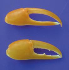 fake-claws-220.jpg