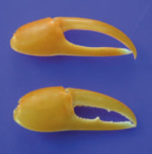 fake-claws-220.jpg