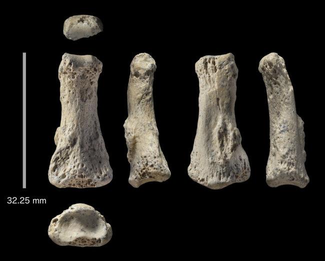 Finger bones