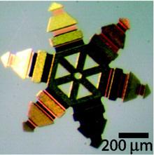 microgripper.jpg