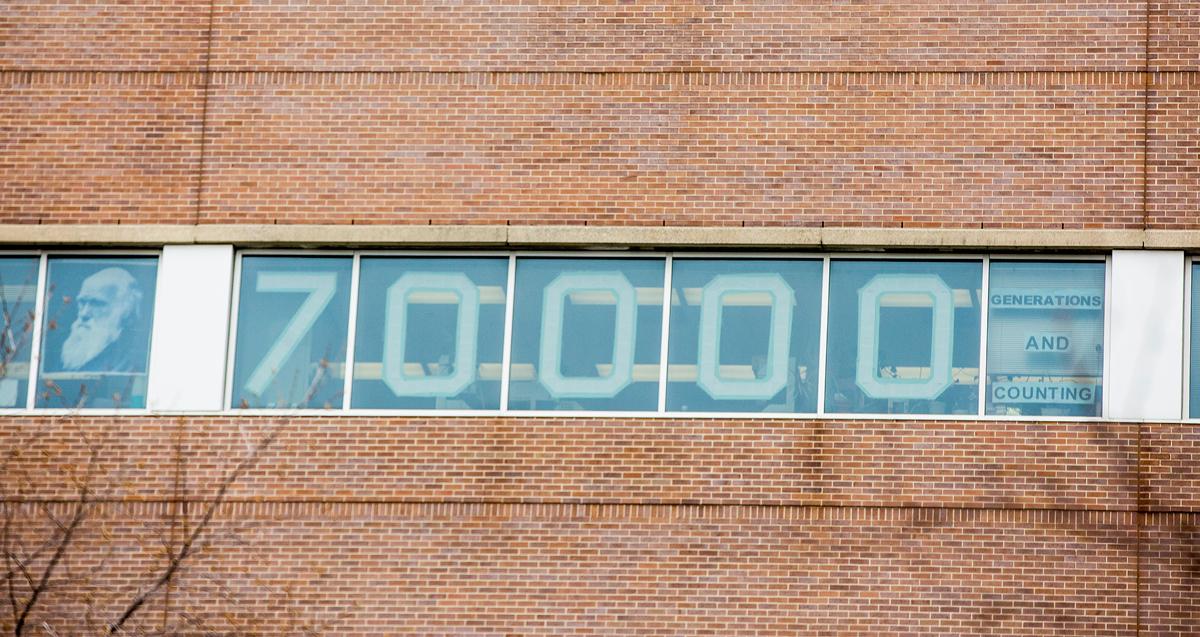 70,000 Generations Lenski Lab Window - Charlotte Bodak