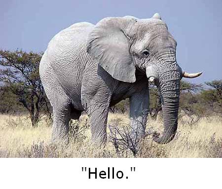 white_elephant_talk.png