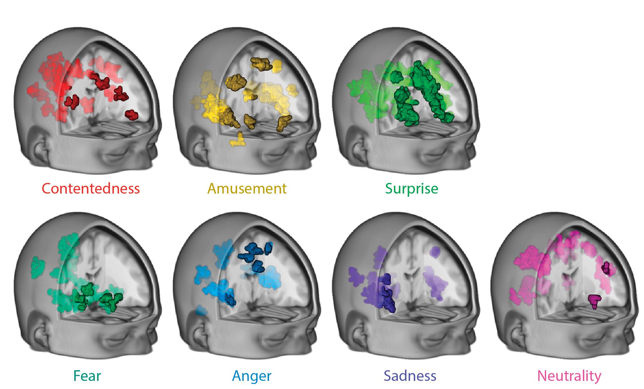 Brain Emotions - Duke University