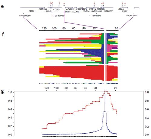 haplotypeblockplot.png