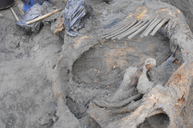 mammoth_remains_in_siberia-_160114.jpg