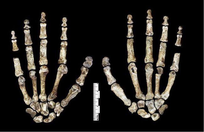 Homo naledi Hand - Lee Roger Berger