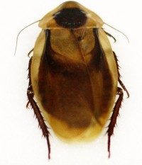 cockroach-e1328208206855.jpg