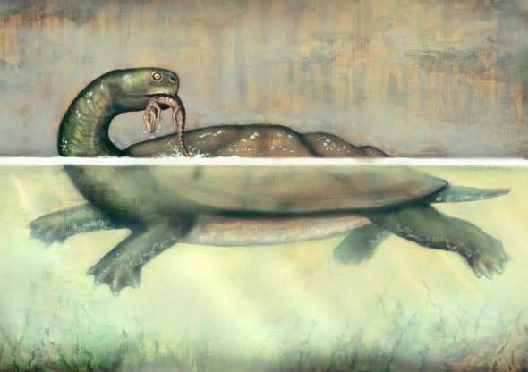 giant-turtle-e1337635675202.jpg