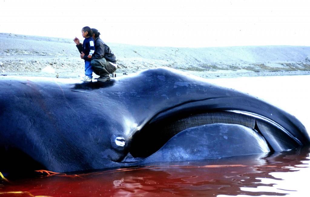 Bowhead_Whale_2002-08-10-1024x652.jpg