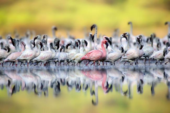 Flamingos-Opener.jpg
