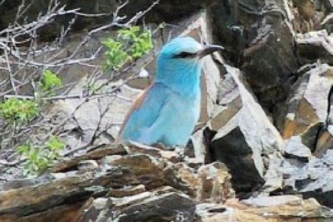 bird-300x175.jpg