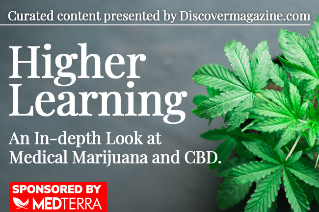 An In-Depth Look at Medical Marijuana and CBD
