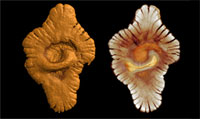 Gabon_fossils.jpg