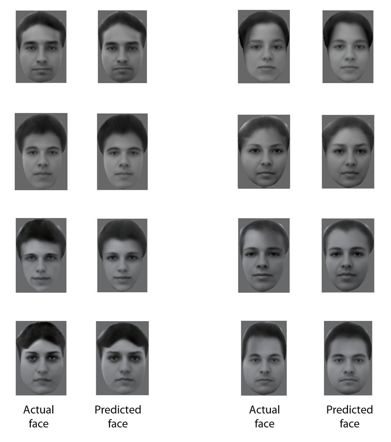 Algorithm Accurately Reconstructs Faces From A Monkey's Brain Waves
