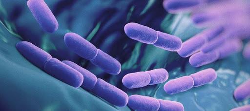 Best Probiotic Supplements 12