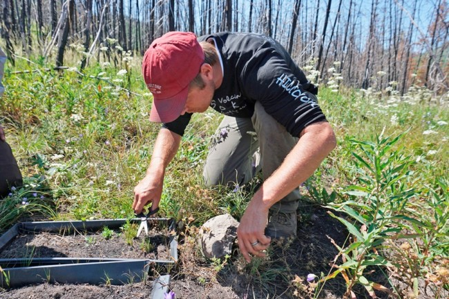 Nathan Gill Seedling Research - Kristen Pope
