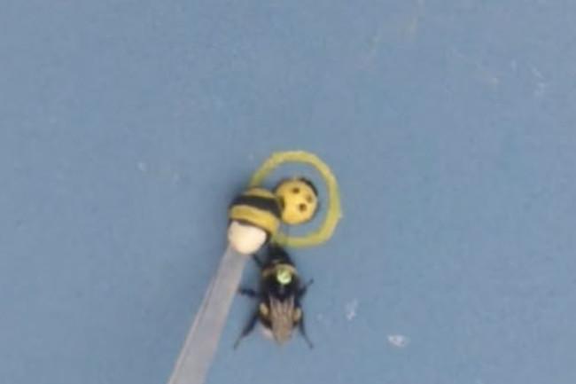 a-bee-hand.jpg