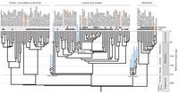 Phylogeny-thumb-200x106-19057.jpg