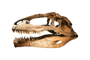How Shark-Toothed Dinosaurs Came to Rule the World