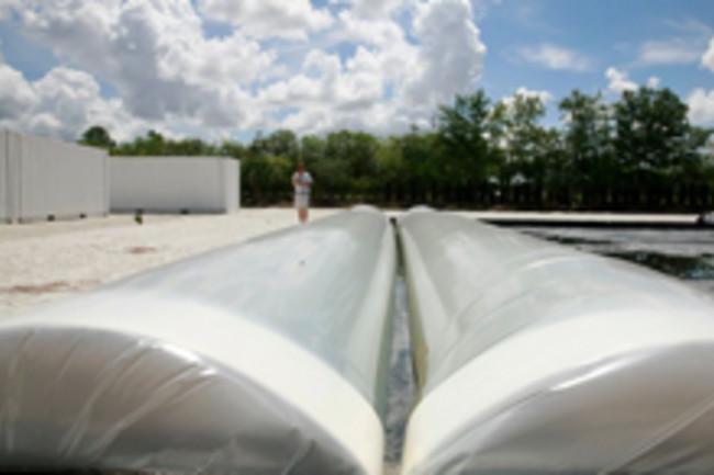 algae-tubes.jpg