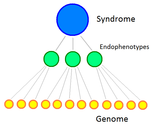 endophenotypes_B.png