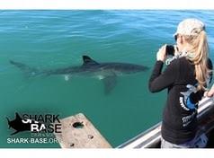 SharkBase
