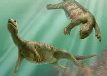 turtle-ancestor.jpg